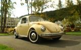 Tweety the 1971 VW Super Beetle Semi Automatic BuG