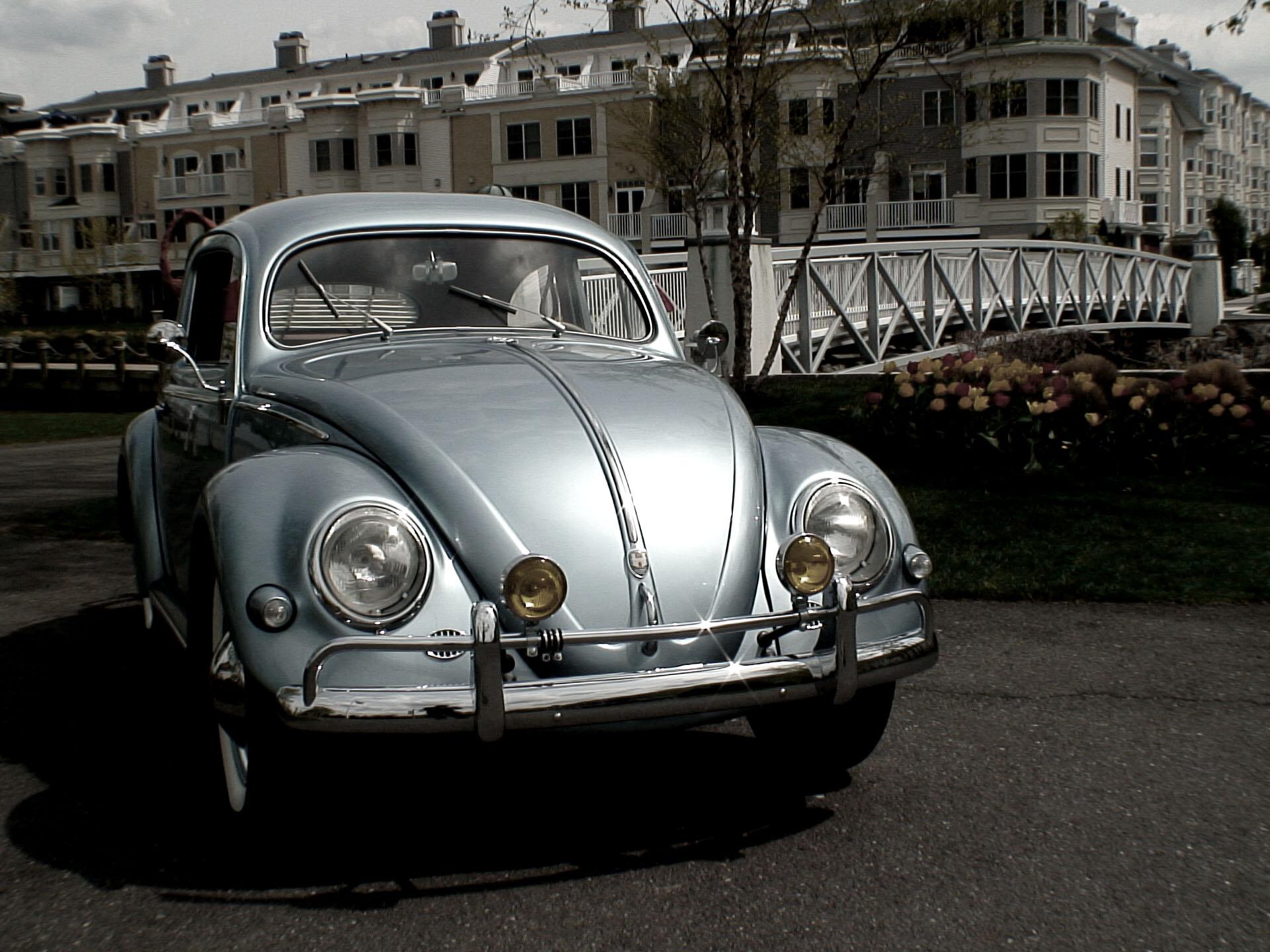 classic vw bugs chris vallones works  art   volkswagen beetle wall vintage type